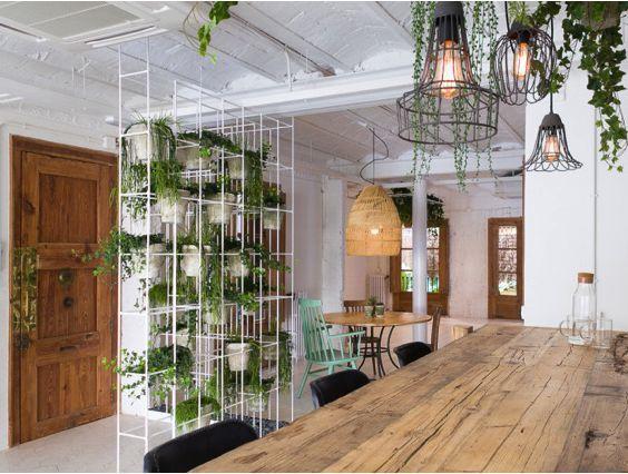 plantas colgantes para dummies formando un muro divisor