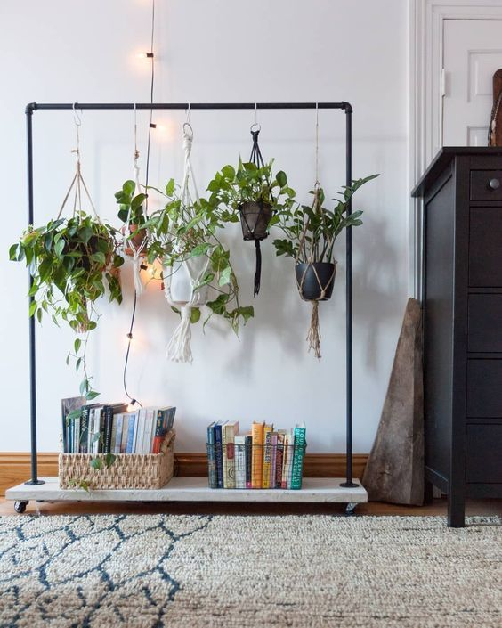 plantas colgantes para dummies en un perchero