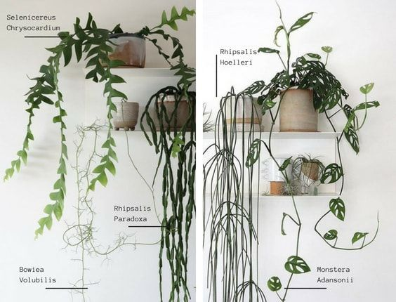 plantas colgantes nada vistas