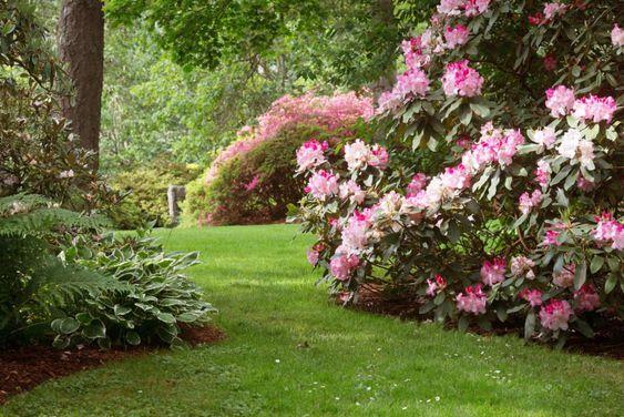 decoralinks | plantas de exterior - rododendro