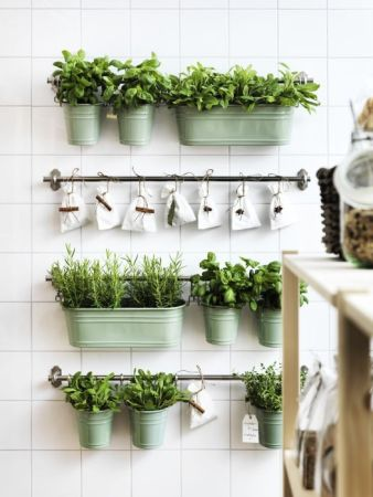 add greenery to you wall