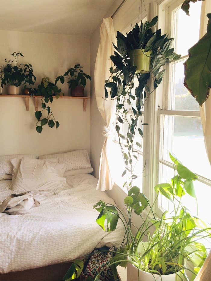 Φυτά για να κάνεις το υπνοδωμάτιο πιο ζωντανό!