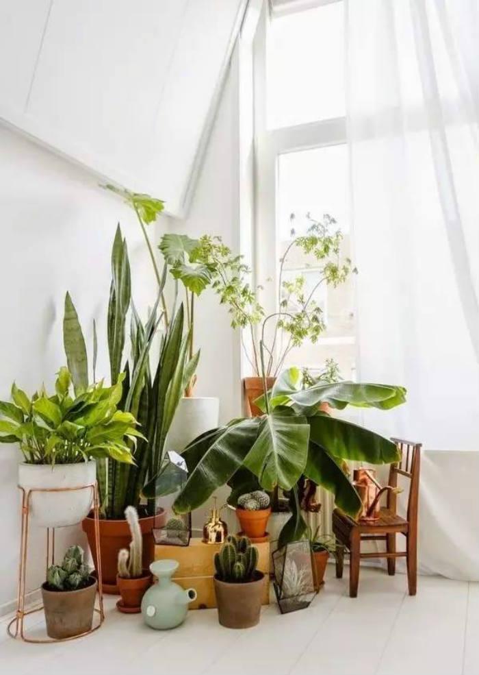 φυτα εσωτερικου χωρου σε μινι ζουγκλα