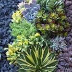 BEST SUCCULENT GARDEN DESIGN IDEAS 133