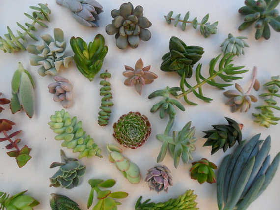 BEST SUCCULENT GARDEN DESIGN IDEAS 60