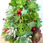 BEST SUCCULENT GARDEN DESIGN IDEAS 62