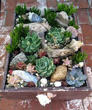 120 Best Succulent Garden Design Ideas Decoratoo