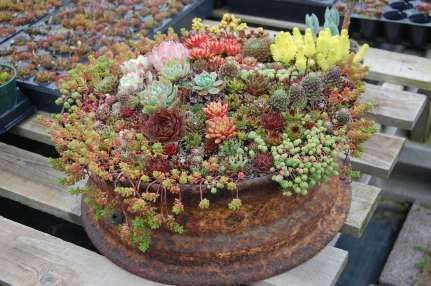 120 Best Succulent Garden Design Ideas decoratoo