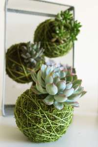 BEST SUCCULENT GARDEN DESIGN IDEAS 99