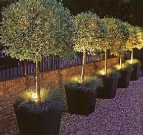 Design For Backyard Landscaping 24