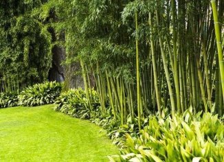 Design For Backyard Landscaping 43