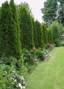 Design For Backyard Landscaping 7