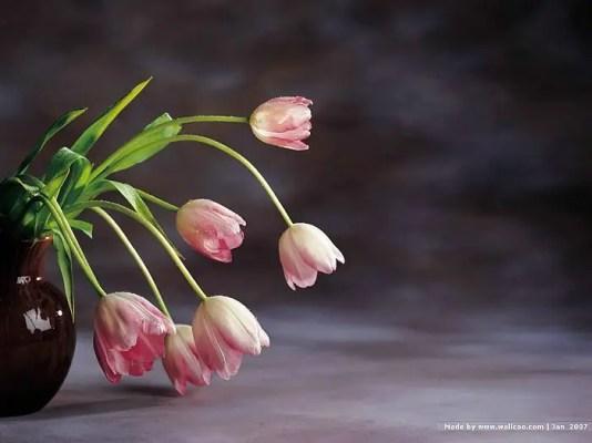 Tulips In Vase 27