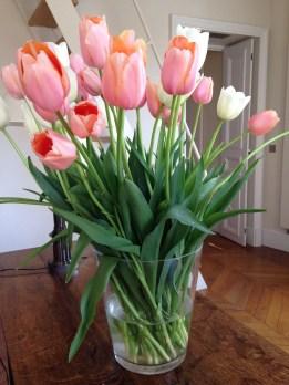 Tulips In Vase 34