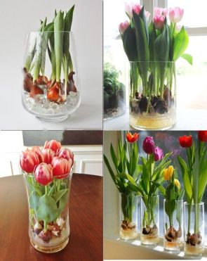 Tulips In Vase 38