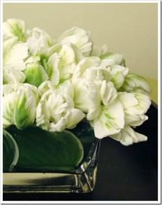 Tulips In Vase 68