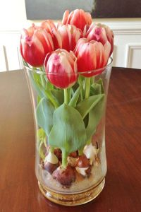 Tulips In Vase 75