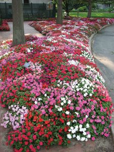 Flower Beds In Front Of House 79