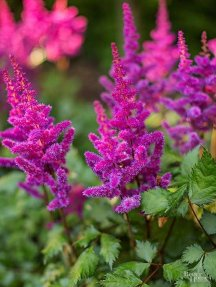 Better Homes And Gardens/Mary Jo LaViolette Garden/CMR#