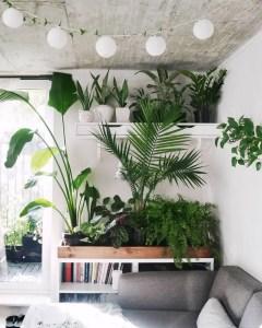 Indoor Plants 11