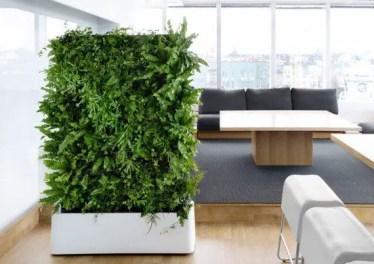 Indoor Plants 17