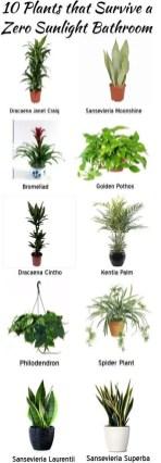 Indoor Plants 27