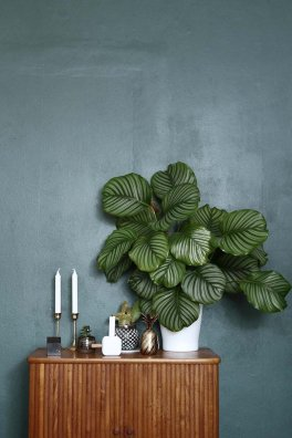 Indoor Plants 30