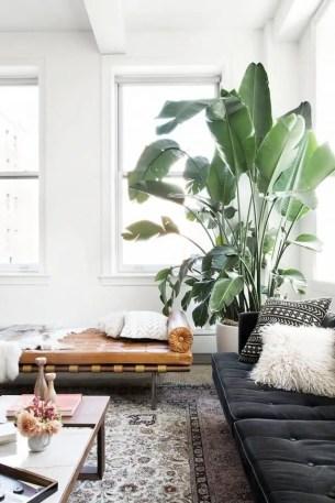 Indoor Plants 39