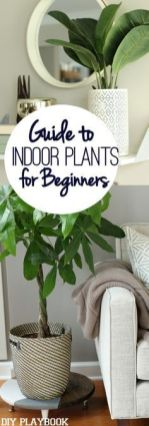 Indoor Plants 47