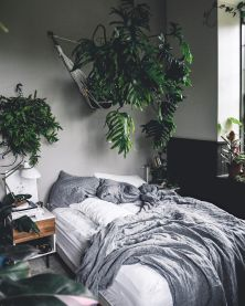 Indoor Plants 60