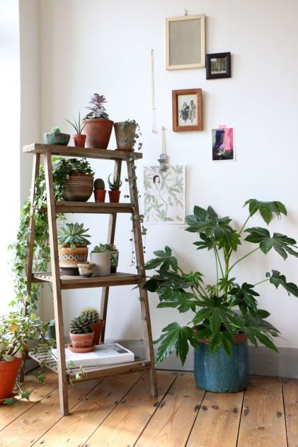 Indoor Plants 67