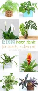 Indoor Plants 74