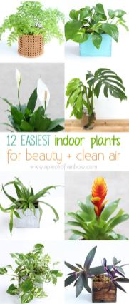 Indoor Plants 74