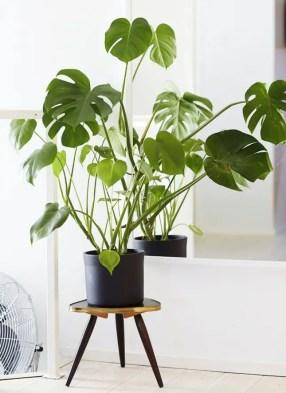 Indoor Plants 81