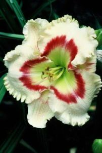 Daylily Garden 33