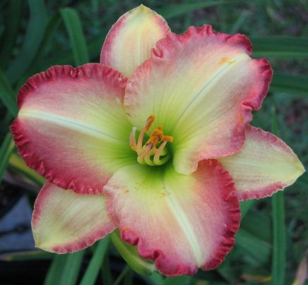Daylily Garden 73
