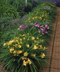 Daylily Garden 96