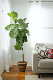 Indoor Plants 108