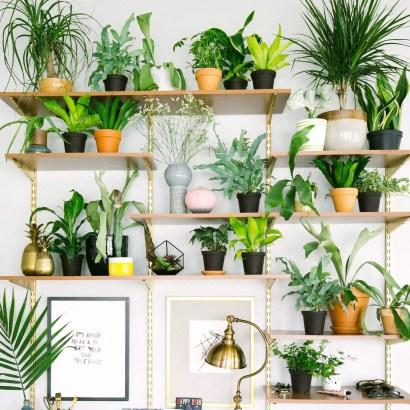 Indoor Plants 110