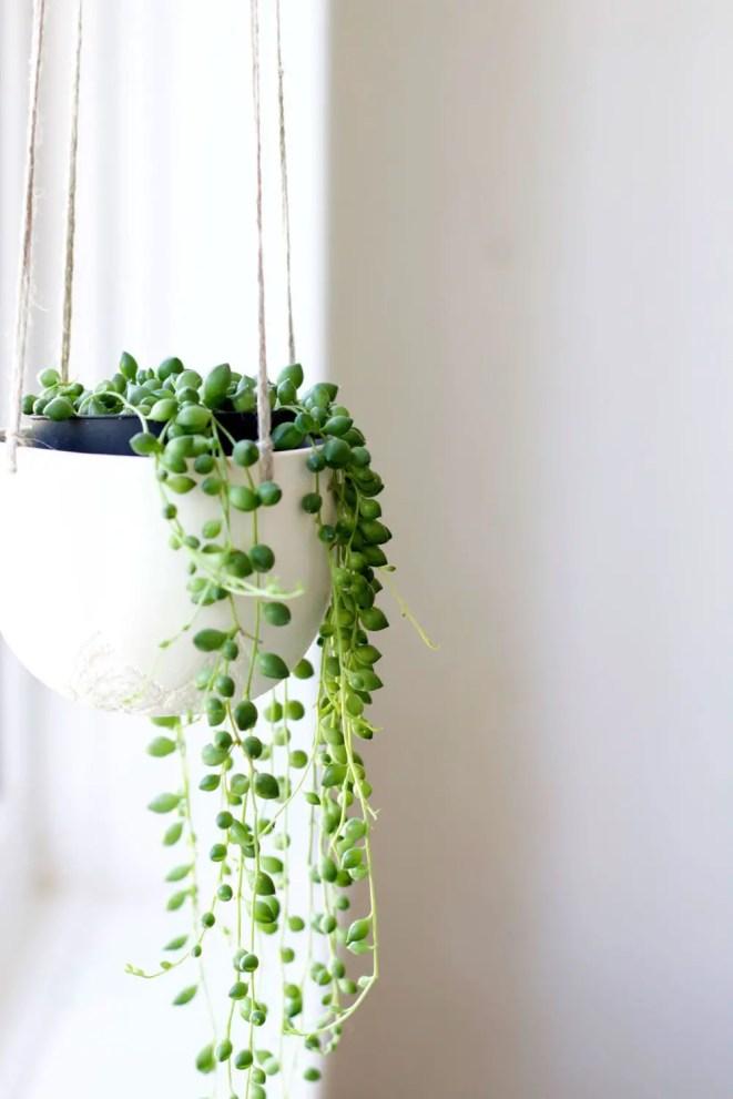 Indoor Plants 19