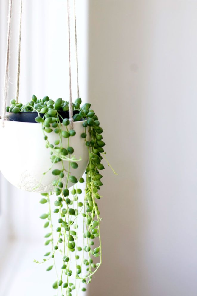 Indoor Plants 19