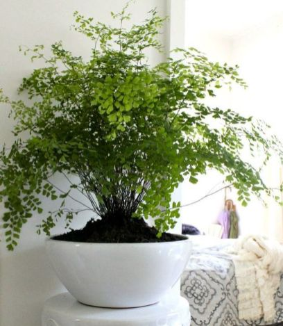 Indoor Plants 26