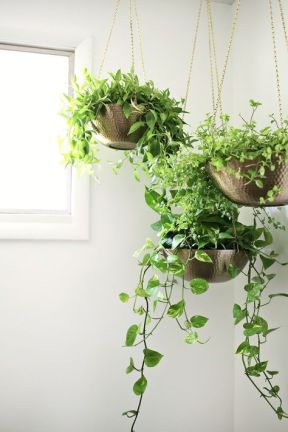 Indoor Plants 42