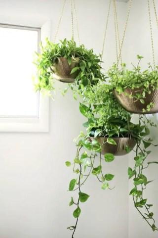 Indoor Plants 42