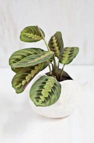 Indoor Plants 47