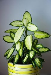 Indoor Plants 50
