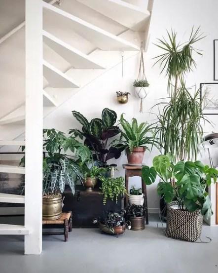 Indoor Plants 53