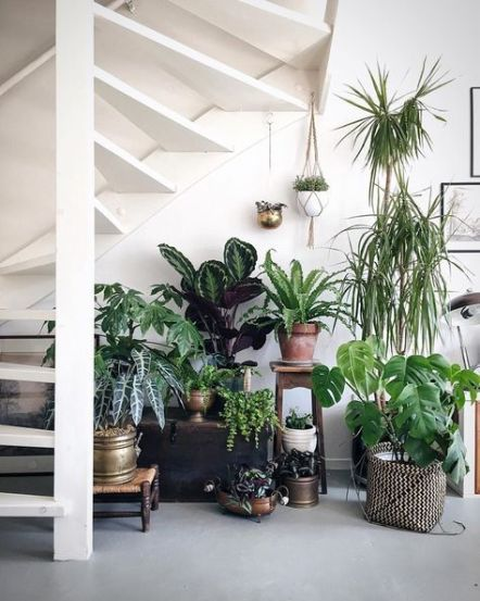 Indoor Plants 53