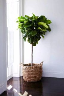 Indoor Plants 6