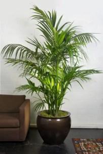Indoor Plants 73